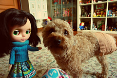 little panther and pino chan (girl enchanted) Tags: red dog ikea puppy toy toys dolls collection poodle doggy collectible pup bookcase dollies toyroom expedit toyshelf dollyroom kennerblythedoll