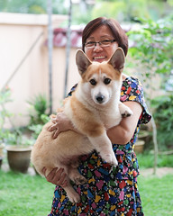 Mom & Toffee (juzmarc) Tags: portrait people dog pet pets dogs animal animals portraits canon pembroke corgi portraiture welsh welshcorgi ef portraitures 5d3 canon5diii 5diii canon5d3