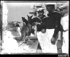 Three German sailors with a wallaby on board the German cruiser KOLN