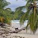 Scimmie capuccino sulla spiaggia di Cahuita