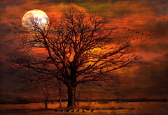 Anna's Moon (TicKavich) Tags: sunset moon snow tree rural sunrise photomix blinkagain bestevercompetitiongroup bestevergoldenartists creativephotocafe besteverdigitalphotography vigilantphotographersunite