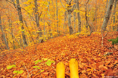 autumn woods with rubber boots (.:: Maya ::.) Tags: autumn woods boots rubber bulgaria есен природа rodopi родопи rhodope гора българия ботуши буки mayaeye mayakarkalicheva маякъркаличева