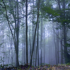 May it be (Pilar Azaa Taln ) Tags: trees france fog forest rboles europa bosque niebla aquitania pierresaintmartin seleccionar pilarazaataln rememberthatmomentlevel1 copyrightpilarazaataln