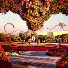#miracle #garden (~ it's OvEr) Tags: square squareformat hudson iphoneography instagramapp uploaded:by=instagram
