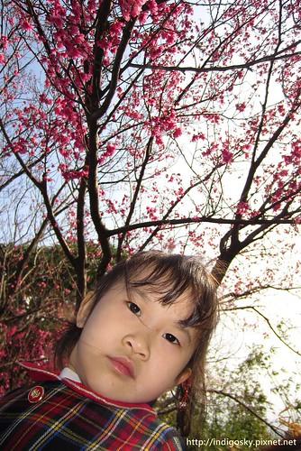 北投賞櫻-IMG_8496