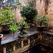 Garden at 95 Ma May House, Hoan Kiem District  - Hanoi, Vietnam