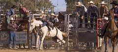Hanging On (SteveKPhotography) Tags: horse animals cowboy sony sigma rodeo equine a65