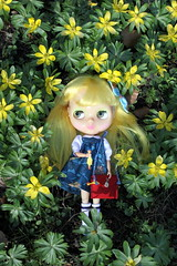 Yellow hair, yellow flowers and... (*Pppilottchen aka dollily*) Tags: wednesday annabelle rubberchicken blythe visitor mrm besuch rbl winteraconite winterlinge babydolldress mrsretromama puppenmode schneckiene wubbachiken dollilydollsfashiom schooliscoolskipperdressremake
