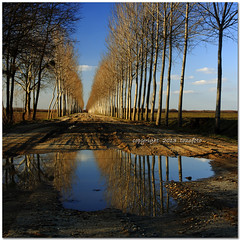 (tozofoto) Tags: road travel trees sky reflection travelling colors field clouds canon landscape lights alley bravo europe hungary shadows dirt agriculture springtime zala tozofoto fleursetpaysages llitedespaysages