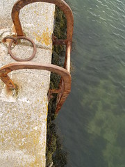 Steps (divnic) Tags: uk sea seaweed water harbour steps seawall northernireland ni ladder stepladder countydown groomsport belfastlough northdown harbourvillage ardspeninsula northdownborough smallharbourvillage