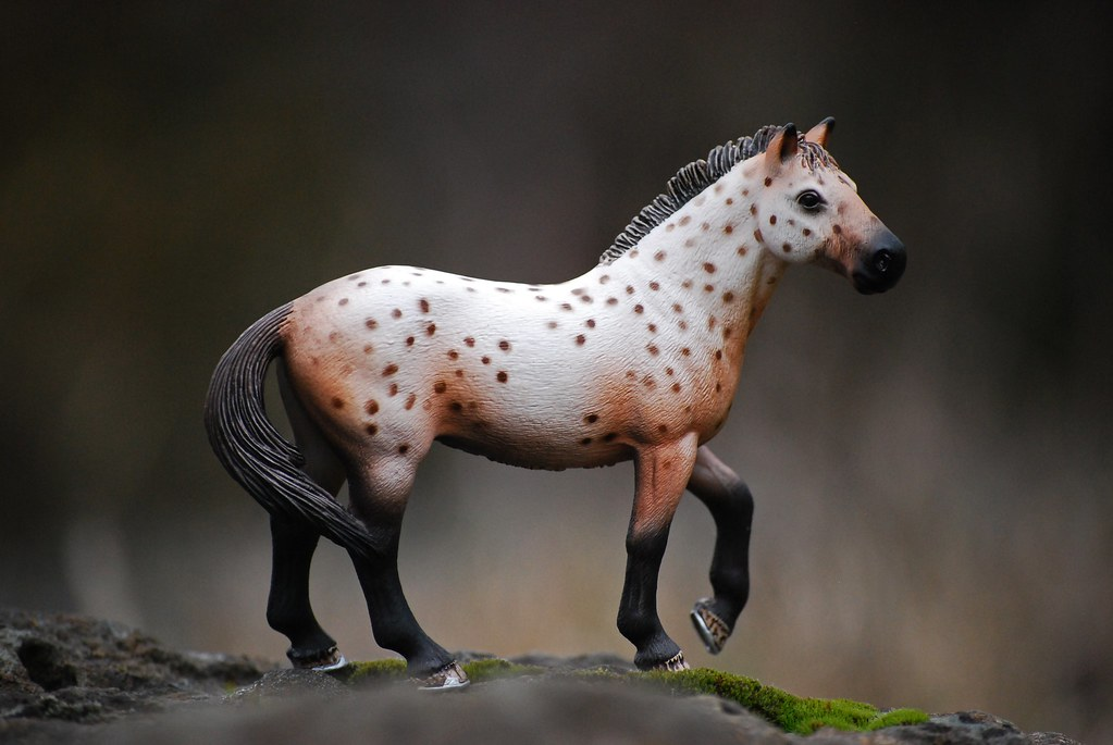 research paper appaloosa The appaloosa horse did you know there are over three hundred and fifty breeds of horses the appaloosa is one of those breeds it has a very interesting history and.