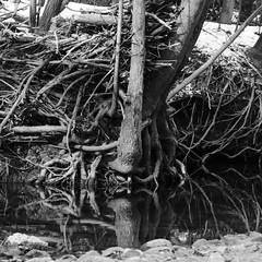 _DSC7089_2 (iloleo) Tags: park trees winter bw toronto nature landscape patterns scenic nikond7000