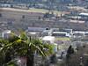 Helikopter über Orselina. Auch Lärmbelastung für Locarno. Im Hintergrund Wohnblöcke und Schulen. Man kann die Maschine noch in Ascona hören. (王磊爱) Tags: schweiz tessin ticino locarno sonne lagomaggiore hubschrauber risiko lärm palmen schulen wohnen lernen helikopter orselina ruhe absturzgefahr wohnblock fluglärm wohnblöcke langensee lepublic absturzrisiko helikopterlärm hubschrauberlärm rumoredielicotteri bruitdhelicopter risikoabwälzung risikodeckung