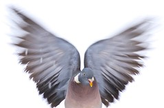 The dove from above (johnrm2013) Tags: canon is usm ef 100400 f4556l