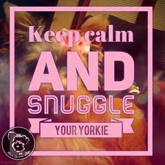 When in doubt (itsayorkielife) Tags: yorkiememe yorkie yorkshireterrier quote