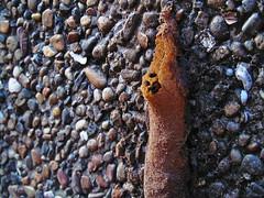 IMG_6988 (juanextrada) Tags: abejas bichos mieleras