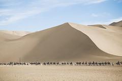 IMG_6820 (chungkwan) Tags: china chinese gansu province weather dry sands canon canonphotos travel world nature landmark landscape   dunhuang  crescent crescentlake  mingsha mingshamountain  camels silkroad
