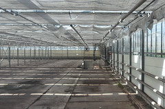 Empty greenhouse (mennomenno.) Tags: kassen greenhouse bleiswijk thenetherlands shadowlight lijnen lines old oud