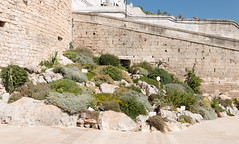 IMG_7743 (jaglazier) Tags: 13thcentury 13thcenturyad 15thcentury 15thcenturyad 17thcentury 17thcenturyad 2016 8216 apulia architecture august buildings castles centrostorico cittabianca copyright2016jamesaglazier fortresses forts hilltowns houses italy oldtown ostuni plants ramps spanish towers urbanism walls whitecity circuitwalls cities flowers roundtowers streetscapes succulents whitewash whitewashed puglia