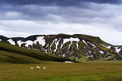 La triplette version moutons (-Lucie-) Tags: nikond7100 sigma1750 paysage montagne islande