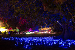 _MG_4863.jpg (Tibor Kovacs) Tags: night colours tree vivid australia events sydney projections light