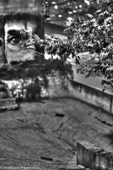 Street Eyes (anastase.papoortzis) Tags: canon canon5dmkiii greece grcia hellas kavala canon5dmarkiii europe macedonia mediterrneo october rainynight makedoniathraki