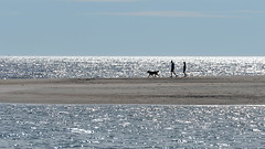 Sept-Iles 2016-08-24 (Patrice StG) Tags: qubec d700 vacances holidays mer sea stlaurent stlawrence golfestlaurent gulf stlawrencegulf sun soleil backlit contr couple chien dog silhouette sand sable
