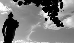 Dmter (Ali Devine) Tags: sceaux statue dmter contrejour tilleul branche nuages