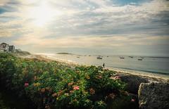 ~Sunrise~ (cheryl c.) Tags: beach gooserocksbeach maine kennebunkport summer beachhouse sky sun ocean roses fuji explored