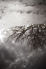 [11/365] (havana.rama) Tags: trees winter cloud storm reflection tree fall wet water pool leaves rain weather clouds canon project dead puddle concrete leaf drops branch moody gloomy seasons cloudy branches havana cement stormy trunk reflective gloom 365 trunks damp glum mahoney 365project 5dmarkii