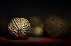 Golden Nut (memories-in-motion) Tags: red macro zeiss gold golden warm walnut nut 1850 walnuss nuss pancolar