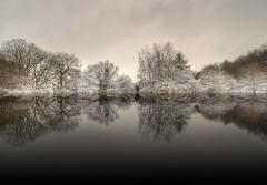Snow (Eric Goncalves) Tags: trees winter snow cold reflections array cannop nikond7000 ericgoncalves rememberthatmomentlevel1 rememberthatmomentlevel2 rememberthatmomentlevel3
