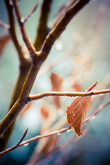snow macro closeup leaf nikon melting branch forrest... (Photo: Gino Andenmatten | Photography on Flickr)