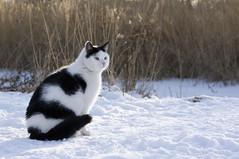 Cats on ice (The Sandy) Tags: cat jack kitten spot catscalledjack