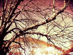 50 sfumature di rosso (cuginAle) Tags: di 50 rosso immagini sfumature flickrandroidapp:filter=none