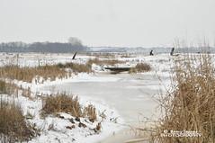 Snowy lands: The fishpassage (Remy Snippe) Tags: winter white snow nature nikon sneeuw natuur wit d90 tamron1750mm klinkenvlierseplas remysnippe wwwremysnippenl