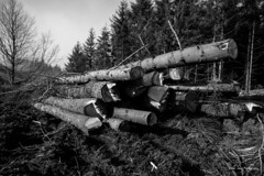 Macclesfield Forest (Oliver Wood Photography) Tags: monochrome forest cheshire timber environment orton macclesfield
