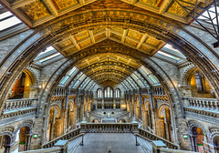 The Natural History Museum, London (Gene Krasko Photography) Tags: uk greatbritain england london museum architecture hall unitedkingdom britain main mainhall hdr britisharchitecture thenaturalhistorymuseum naturalhistorymuseumlondon photomatixpro highdynamicrangeimage nikond700 blinkagain genekrasko