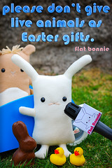 Easter message from Flat Bonnie (Flat Bonnie & Friends) Tags: park rescue pet anime cute rabbit bunny bunnies art love dutch animal japan easter toy toys japanese guineapig duck stuffed mod hare doll soft hand flat graphic designer handmade chocolate crafts tail culture craft felt pop retro plush made plushies cotton gift lucky harajuku kawaii indie plushie animation bonnie rabbits collectible etsy lover custom shelter fleece interview adopt bun lapin usagi adoption designers jpop lop designertoy crafted lagomorph bunneh flattie designerplush flatbonnie