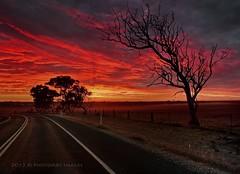 Hot Sunrise (PhotoArt Images) Tags: sunrise australia deadtree southaustralia strathalbyn redsunrise hotanddry nikon2470mm28 photoartimages adelaidehillssunrise