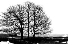 Winter Peak District Tideswell #dailyshoot #Explore (Leshaines123) Tags: trees monochrome silhouette les canon landscape eos haines district derbyshire peak explore pfb photoplus fencelines 2013 dailyshoot anawesomeshot leshaines