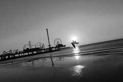 Fly to the Fun (KatieWhitaker) Tags: ocean white black galveston bird beach water wheel kids sunrise fun island grey pier sand nikon seagull gray ferris rollercoaster nikkor pleasure d800 1735mm