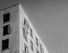 Illusion Of A Dream // (Auensen) Tags: white black building bird monochrome architecture march flying blackwhite nikon unique dream 85mm dreams nikkor dreamworld llusion monotones 2013 d7000 nikond7000 nikonnikkor85mmf18g illusionofadream f718g