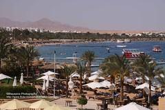 Sharm el-Sheik, beach (blauepics) Tags: life red sea seascape beach water strand landscape fun coast sand meer wasser desert dahab egypt east egyptian middle landschaft osten gypten spass leben sinai wste kste rotes strandleben naher gyptisch