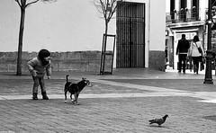 El niño, el perro y la paloma (Sonia Montes) Tags: madrid plaza bw white black byn blancoynegro canon ciudad perro urbana animales palomas soniamontes