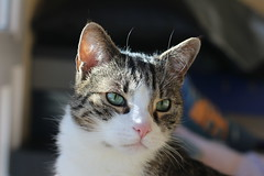 Chausette (eric s67) Tags: cats cat chats katten kat chat gatos gato katze gatto katzen gatti