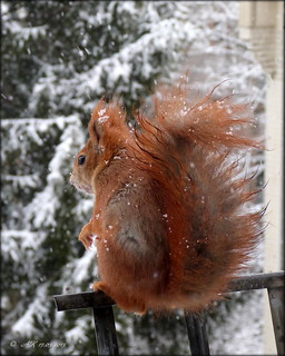 Schnee und Eichhörnchen waren wieder da ...