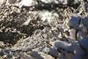 koning winter regeert (Sporen rond Alkmaar) Tags: en sneeuw met duinen barre sneeuwpret egmond pasen schoorl koude