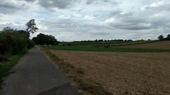 Von Friesenheim nach Köngernheim