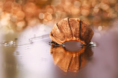 Oh! (charhedman) Tags: macro water glass reflections mirror open bokeh shell oh crustacean